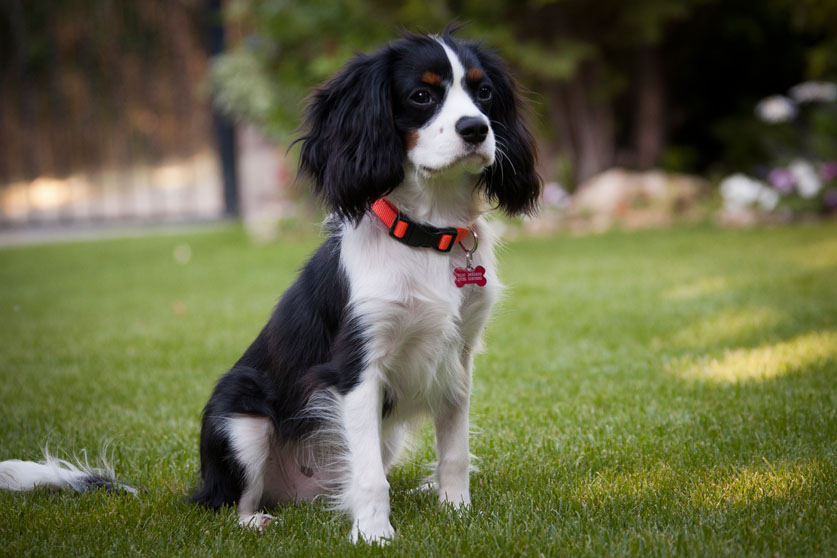 The 15 best dog breeds for families   Pets   journaltimes com
